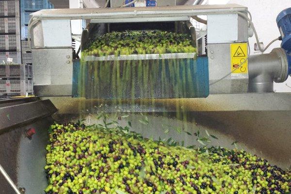 olio pugliese prodotto in frantoio