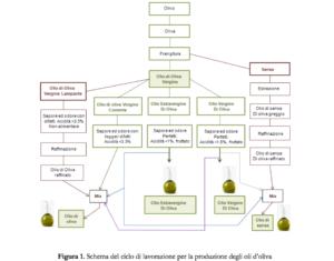 come si produce l'olio extravergine