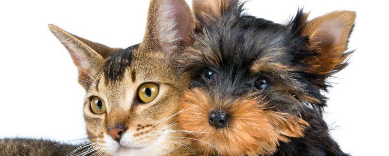 Olio di oliva fa bene a cani e gatti