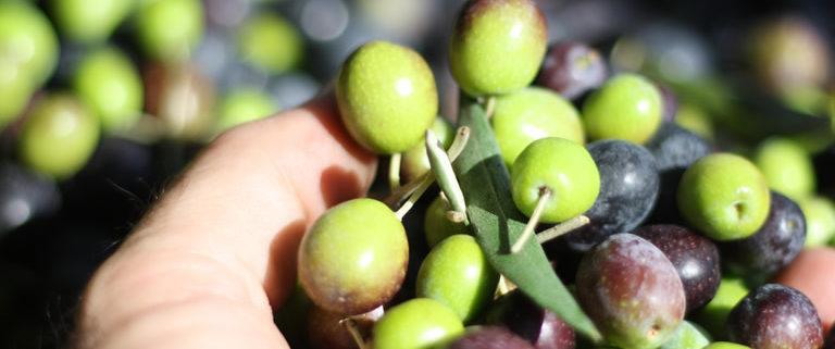 Cosa è l'olio biodinamico? come viene prodotto?