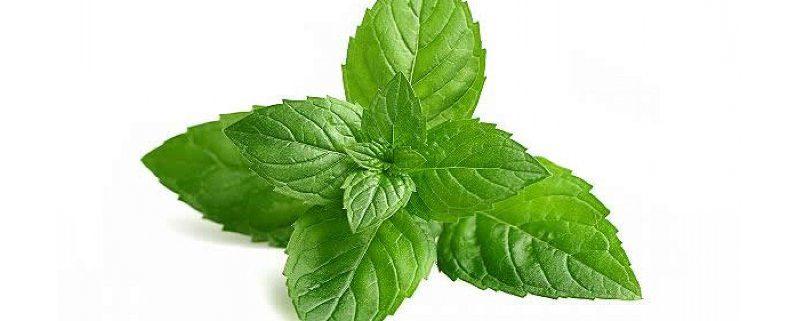 come preparare l'olio aromatizzato alla menta?