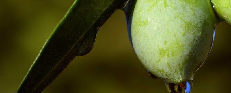 cosa si intende per qualità dell'olio di oliva?