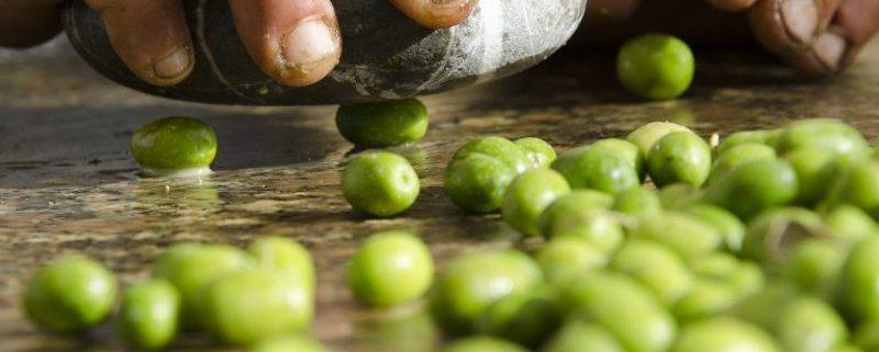 come produrre olio di oliva fatta in casa