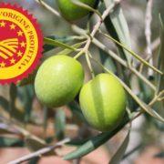 cosa si intende per olio di oliva dop