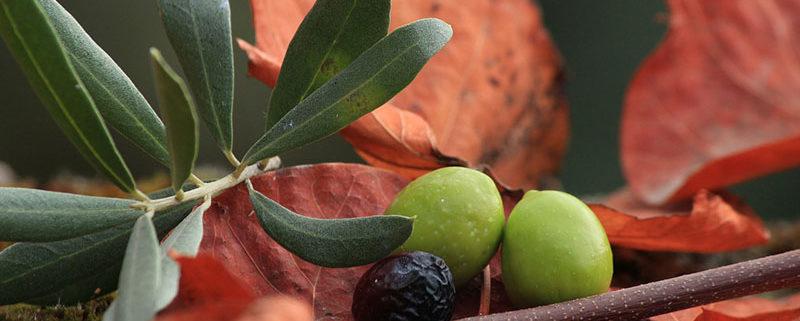 I benefici e valori nutrizionali delle olive
