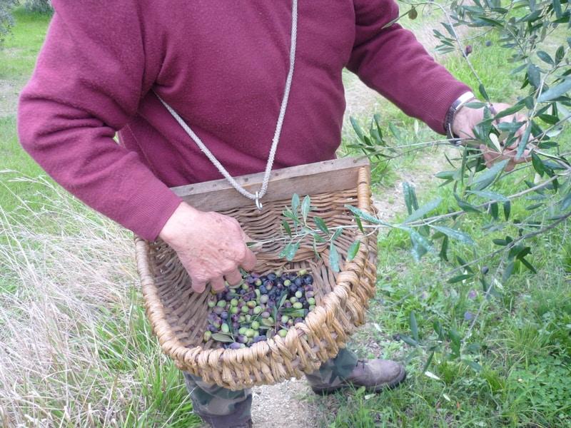 Acquistare l'Olio Evo dal contadino? Una scelta sicura!