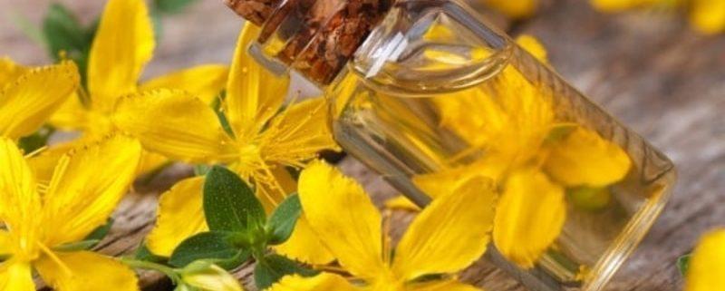 Oleolito di Iperico: il famoso Olio di San Giovanni