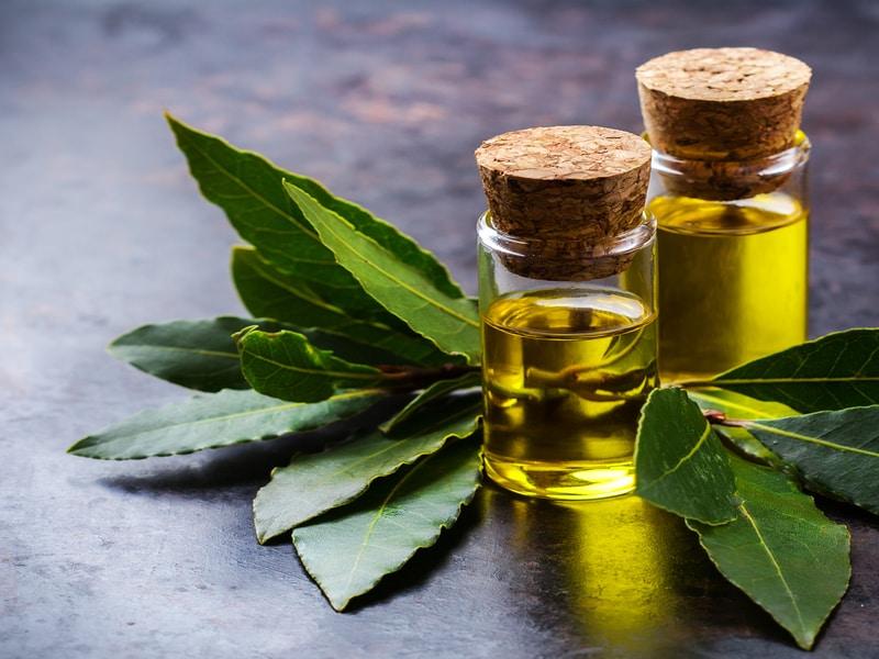 Olio di Oliva e Alloro: un potente Analgesico Naturale