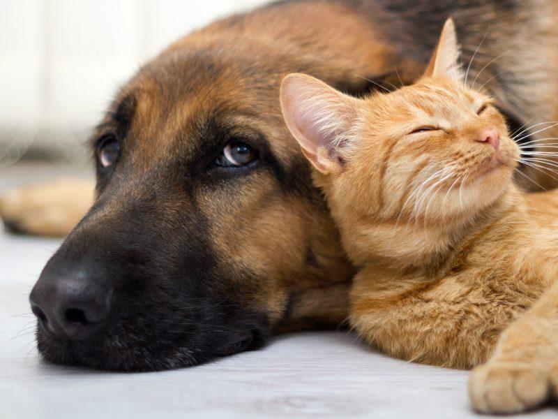 Olio di Oliva contro la Stitichezza di Cani e Gatti