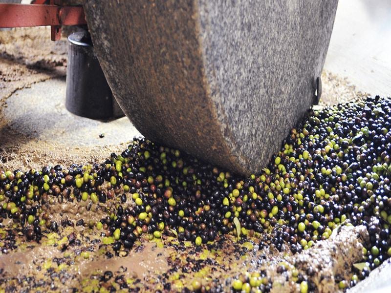 Frantoio: tipi di frangitori per la lavorazione dell'olio