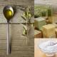 Olio di oliva: come proteggere le nostre piante!