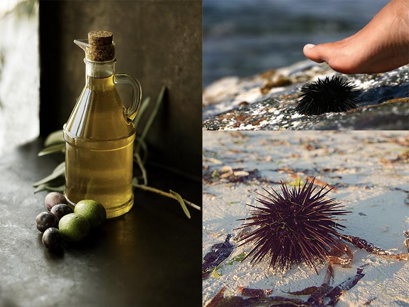 Olio di oliva contro le spine del riccio di mare