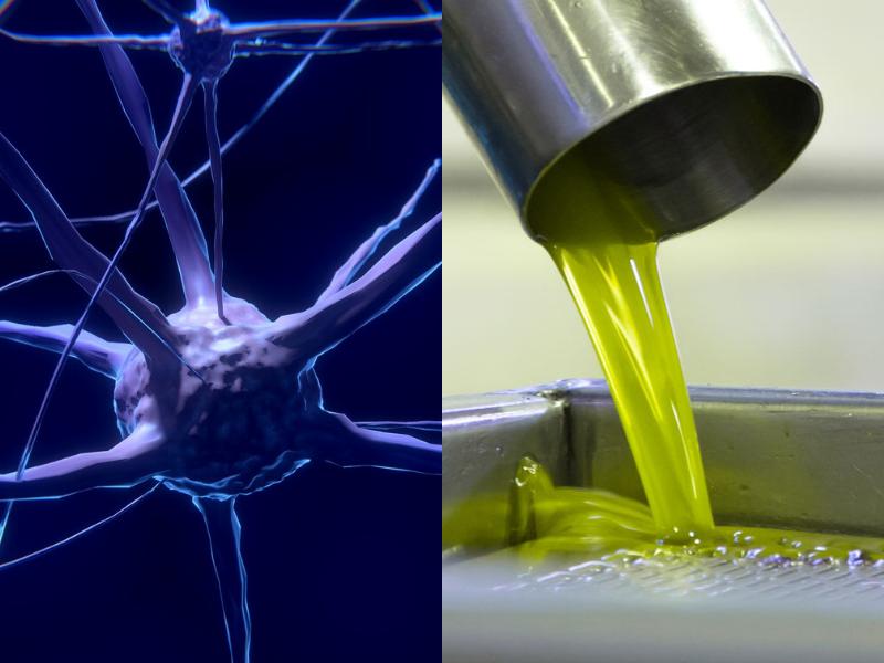 L'Idrossitirosolo nell'Olio di Oliva ringiovanisce il Cervello
