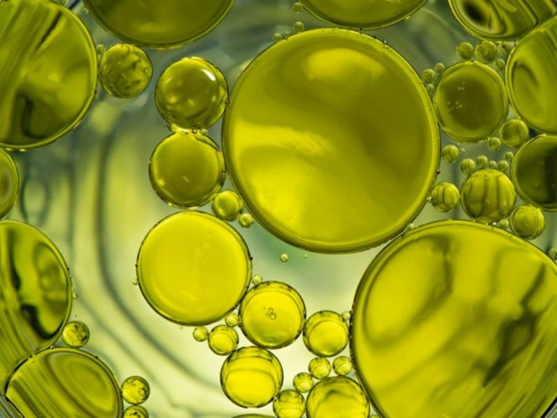 L'acido oleico dell'Olio Evo per la prevenzione della Sclerosi Multipla